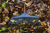 Autumn gardening — Stock Photo