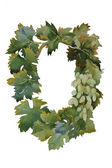 Vine grape frame from leaves and fruits watercolor painting — Stock Photo