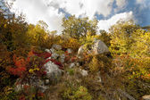 Red, orange and yellow autumn leaves in Crimea mountains — Stock Photo