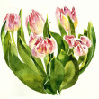 Bouquet of pink tulips watercolor painting — Stock Photo