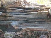 Tekstura kory drzewa — Zdjęcie stockowe