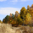 Field road in the autumn forest edge — Stock Photo