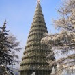 Stock Photo: Main Christmas Tree of Krasnoyarsk City