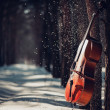 Cello outdoors — Stock Photo