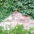 Grunge brick wall with green plant frame — Stock Photo