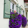 Stock Photo: Flower box on windows