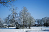 Park in the winter snow — Stock Photo