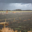 Heavy rainfall flooding  a farm field — Stock Photo
