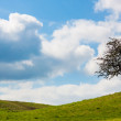 Panorama of green meadow with tree — Stock Photo