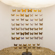 Butterflies on display in a museum — Stock Photo