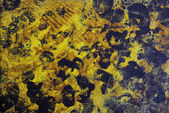 Abstract hand drawn paint background: yellow and black panther-like pattern — Stock Photo