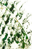 Abstract hand drawn painting / graphics: green grass-like patterns on white — Stock Photo