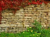 Old, ragged brick wall texture with fall greenery — Stock Photo