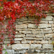 Old, ragged brick wall texture with fall greenery — Stock Photo
