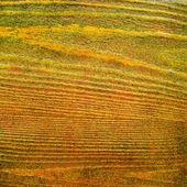 抽象的黄色背景或与 grunge 木质纹理的纸张 — 图库照片