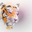 Head of a tiger — Stock Photo