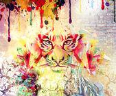 Tiger face — Stock Photo