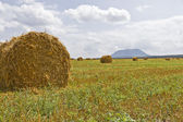 Rolls of straw on the mown field. — Stock Photo