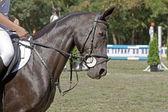 Koń. — Zdjęcie stockowe