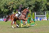 événement sportif. saut d'obstacles — Photo