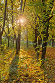 Foresta d'autunno. — Foto Stock