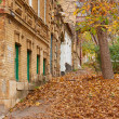 Street strewn with fallen leaves. — Stock Photo