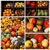 Pumpkins and summer and winter squashes — Stock Photo