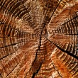 Natural details of sun dried wood — Stock Photo #38401259