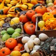 Composition of pumpkins and summer and winter squashes — Stock Photo