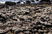 The famous Giant's Causeway of Northern Ireland — Stock Photo