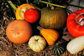 Composition of pumpkins and summer and winter squashes — Stok fotoğraf