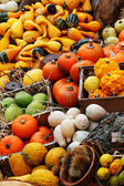 Composition of pumpkins and summer and winter squashes — Foto Stock
