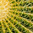 Photo: Barrel Cactus