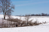 Campo de nieve — Foto de Stock