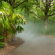 Misty Path — Stock Photo