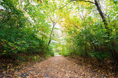 Herfst trail — Stockfoto