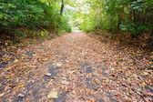 Autumn Trail — Stock Photo