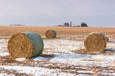 Bale of Hay — Stock Photo