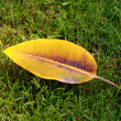 Stand alone autumn leaf for different uses — Stock Photo