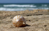 Single shell at beach for different uses — Stock Photo