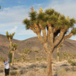Baby Boomer photographing Joshua Tree flowers — Stock Photo