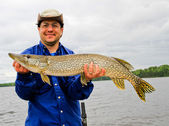 Canadian Northern Pike Trophy fish — Стоковое фото