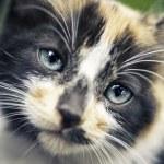 Cub cat portrait — Stock Photo #13383832