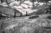 黒と白のフィールド — ストック写真