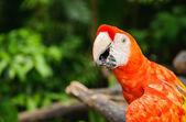 ジャングルの中でオウムの肖像画 — ストック写真