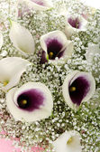 Flowers: bouquet of callas and gypsophila — Stock Photo