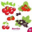 Set of berries, strawberry, cherry, black currant - Image vectorielle