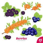Set of blackberries, blueberries and sea buckthorn — Stock Vector
