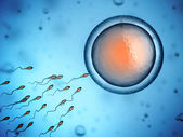 Sperm and egg cell — Stock Photo