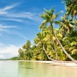 Stock Photo: Palms and tropical sea